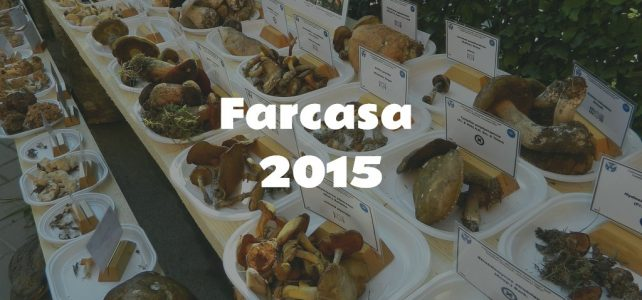 Fungi exhibition 2015 [image gallery]