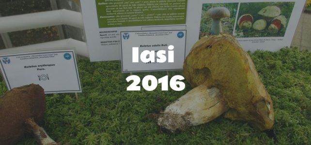 Fungi exhibition at the Iași Botanical Garden (2016) [image gallery]