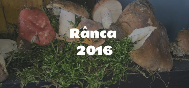Ranca Fungi exhibition Ranca 2016 [image gallery]